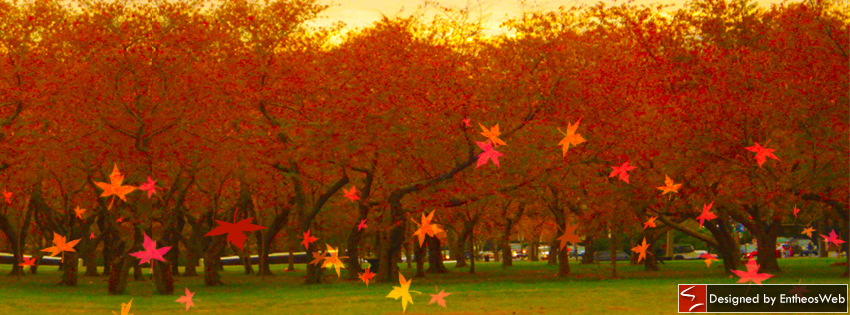 Free Bright Amp Breezy Autumn Themed Facebook Timeline