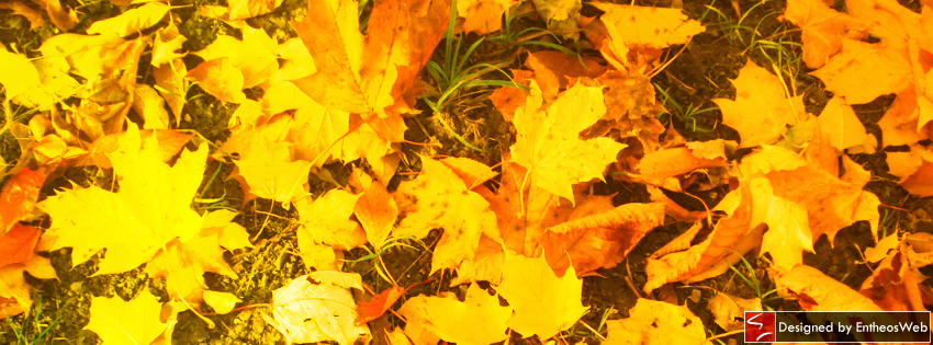 free  bright  u0026 breezy autumn themed facebook timeline