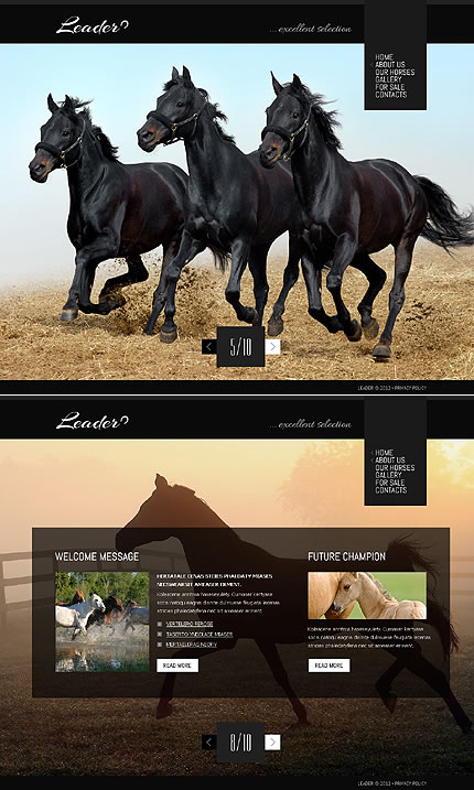 Leader Horse Website Template