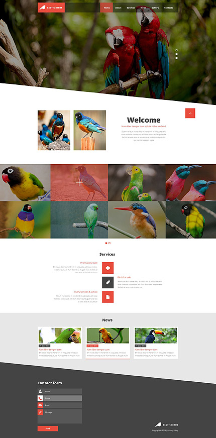 Template 52570 - Exotic Birds Responsive Website Template with Slider, Gallery, Blog and Animations